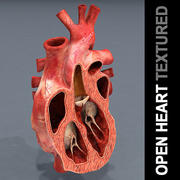 Open Heart Textured 3d model