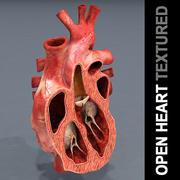Teksturowane serce otwarte 3d model