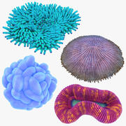 Coral Collection 3d model
