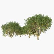 망고 나무 3d model