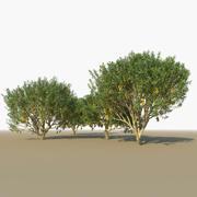 Mango Trees 3d model