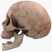 Модель реального человеческого черепа 3d model