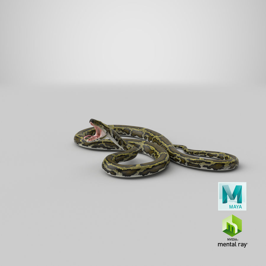 Green Python Snake Attack Pose 3D Model royalty-free 3d model - Preview no. 33