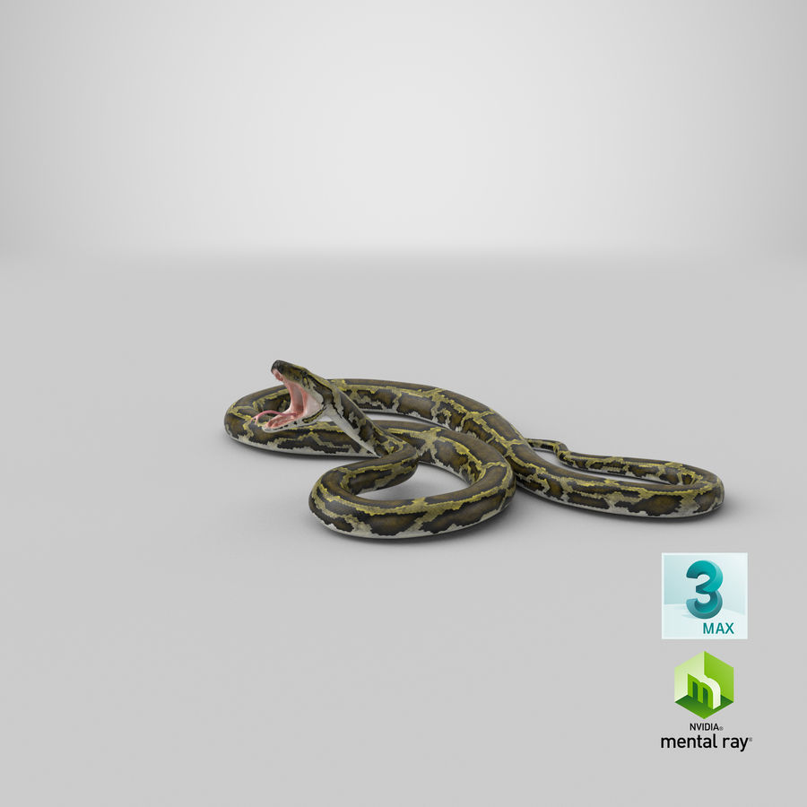 Green Python Snake Attack Pose 3D Model royalty-free 3d model - Preview no. 30