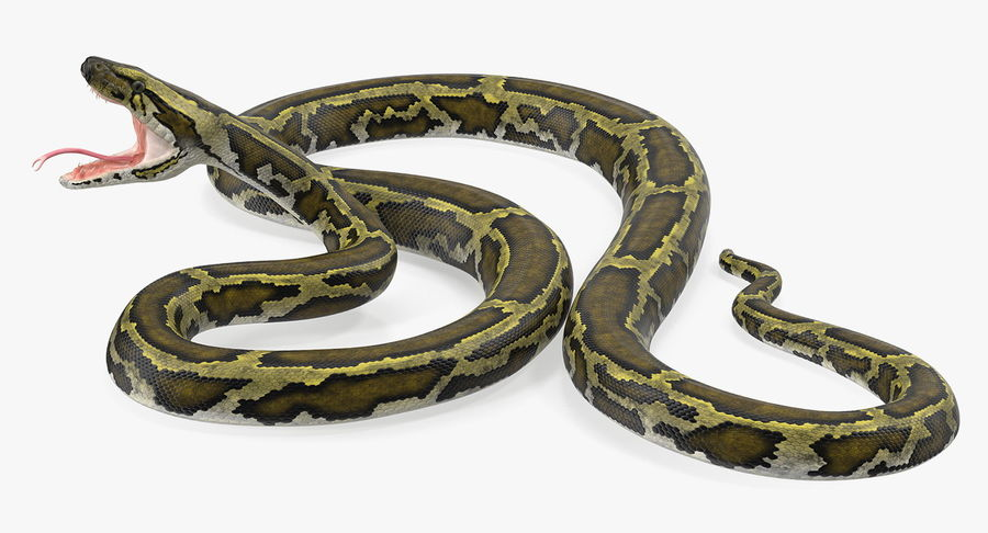 Green Python Snake Attack Pose 3D Model royalty-free 3d model - Preview no. 8