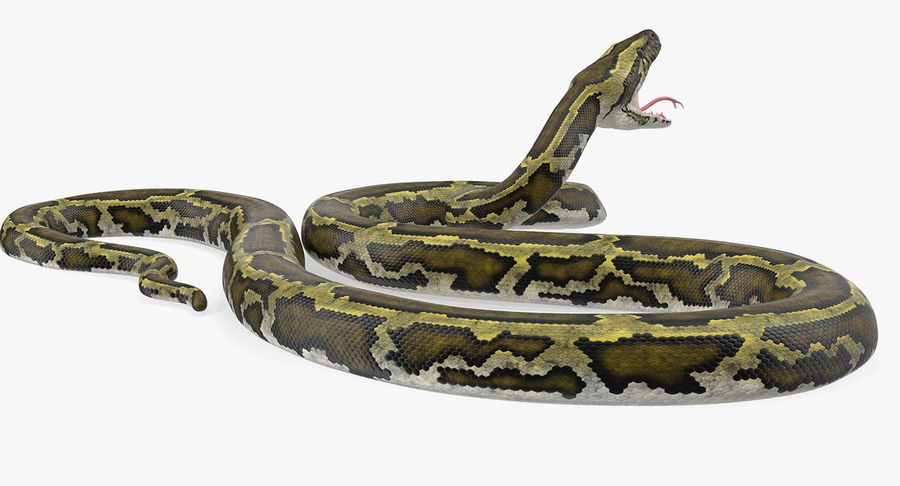 Green Python Snake Attack Pose 3D Model royalty-free 3d model - Preview no. 7