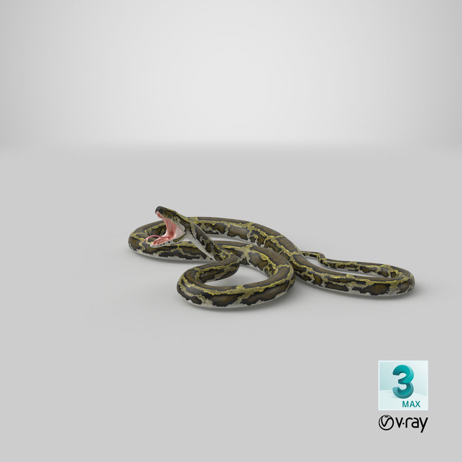 Green Python Snake Attack Pose 3D Model royalty-free 3d model - Preview no. 31