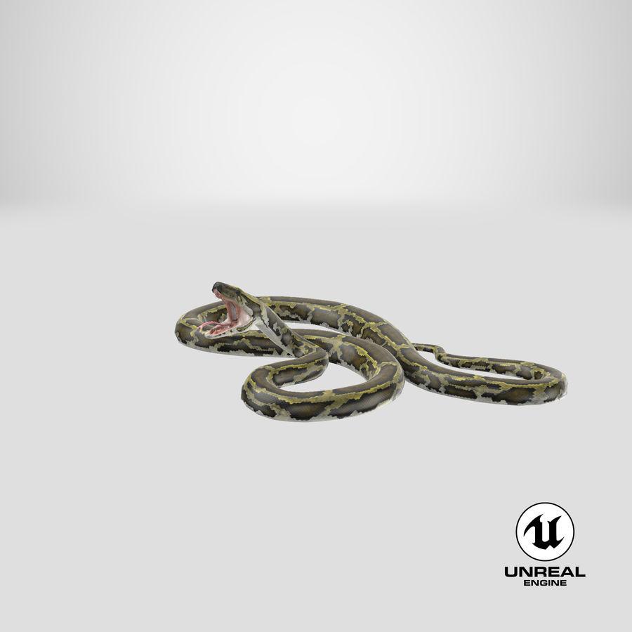 Green Python Snake Attack Pose 3D Model royalty-free 3d model - Preview no. 28