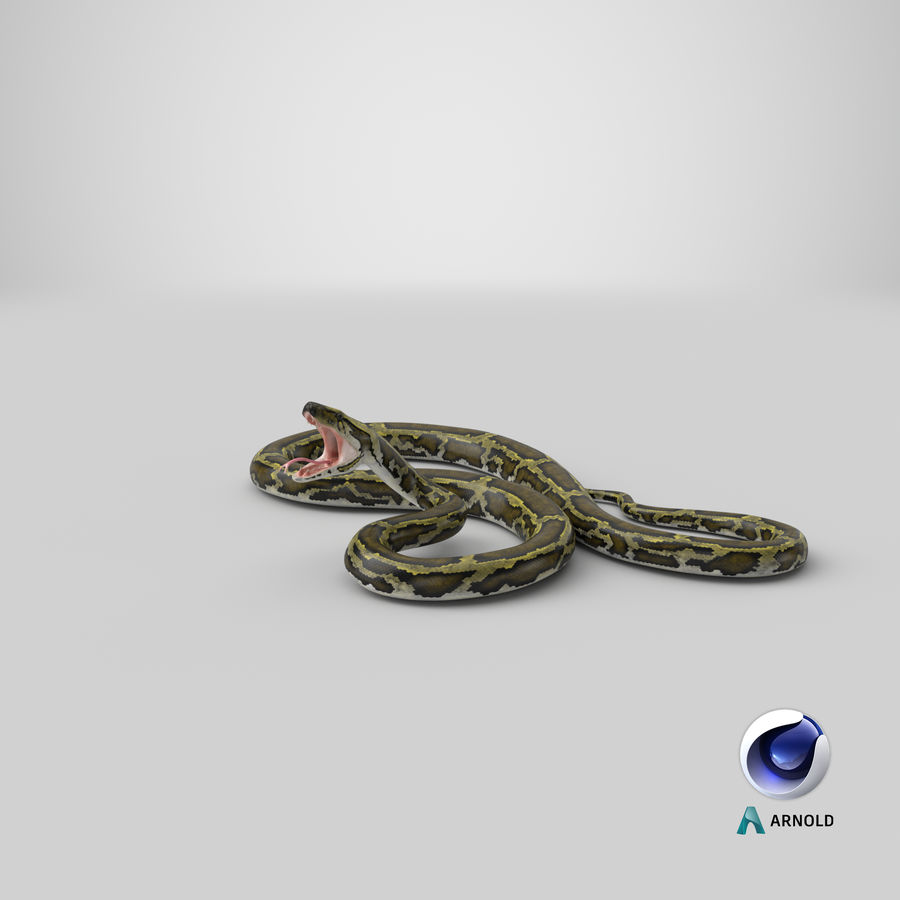 Green Python Snake Attack Pose 3D Model royalty-free 3d model - Preview no. 26