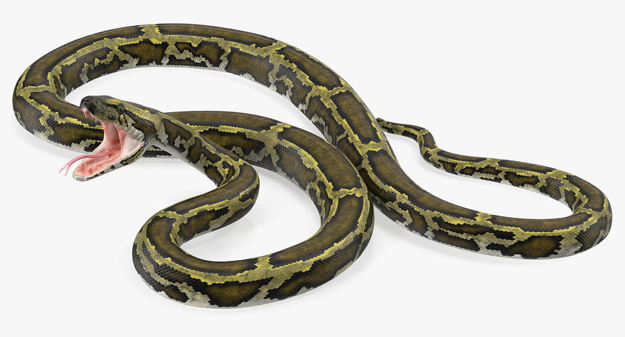 Green Python Snake Attack Pose 3D Model royalty-free 3d model - Preview no. 5