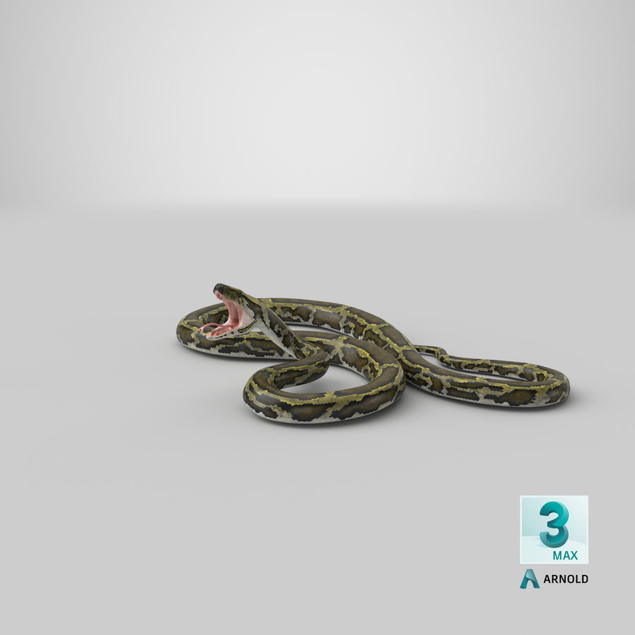 Green Python Snake Attack Pose 3D Model royalty-free 3d model - Preview no. 29