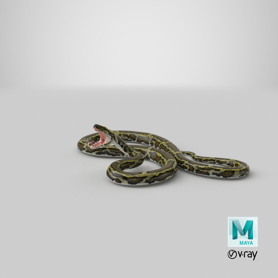 Green Python Snake Attack Pose 3D Model royalty-free 3d model - Preview no. 34