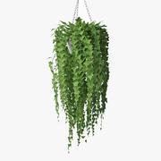 Ivy in pot 07 3d model