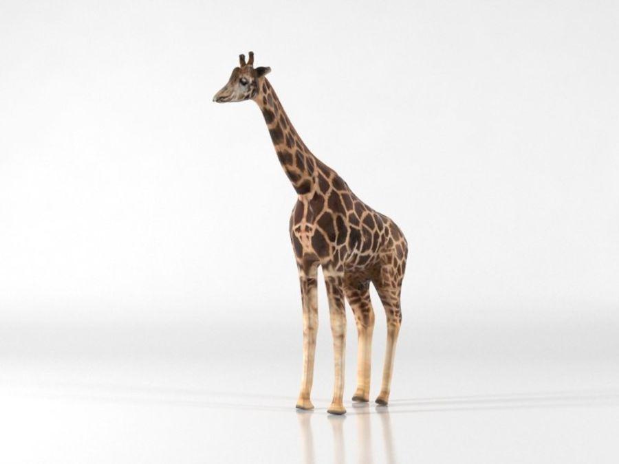 Giraffe royalty-free 3d model - Preview no. 6