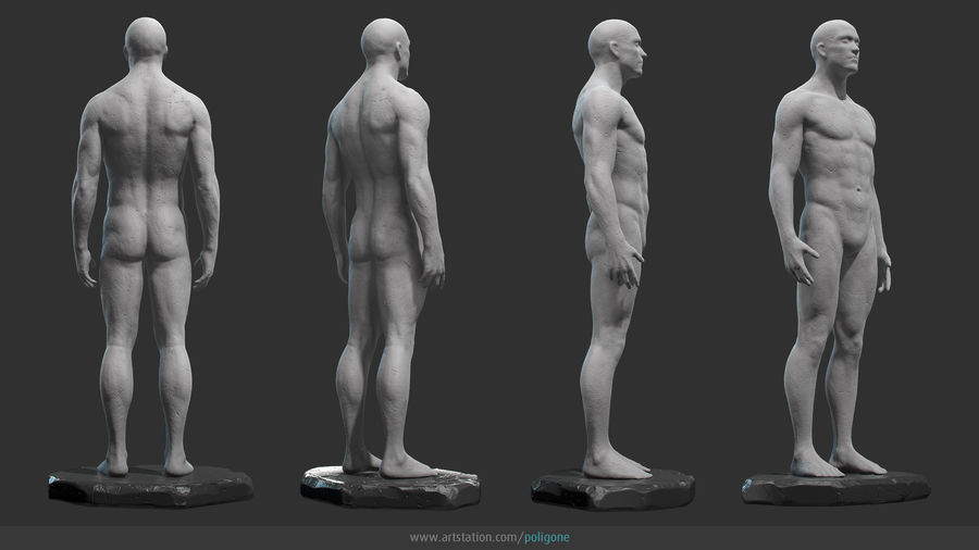 Mannelijke anatomie standbeeld royalty-free 3d model - Preview no. 5