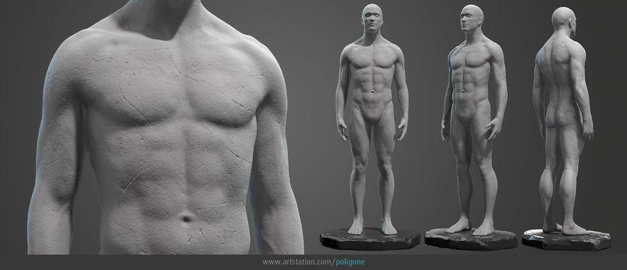 Mannelijke anatomie standbeeld royalty-free 3d model - Preview no. 2
