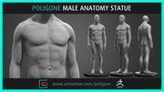 Mannelijke anatomie standbeeld 3d model