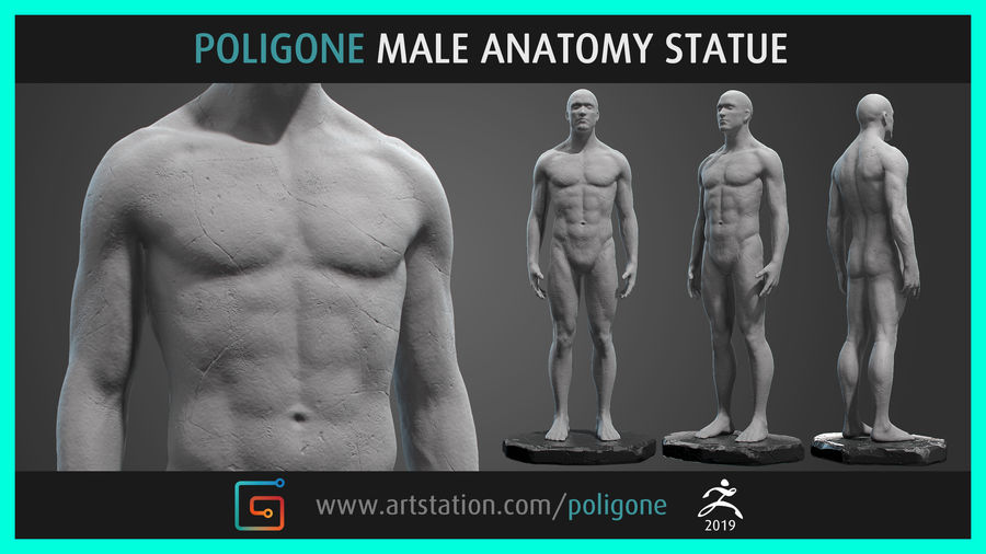 Mannelijke anatomie standbeeld royalty-free 3d model - Preview no. 1