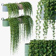 Balcony ivy 3d model