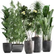 Koleksiyon Egzotik bitkiler 3d model