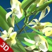 Blume schwarze Orchidee 3d model