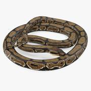 Pose enroulée de serpent python brun 3d model