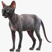 Sphynx-Katze (4) 3d model