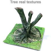 Texturas reais de árvores 3d model