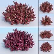 5 Japanese barberry. Berberis thunbergii atropurpurea nana 3d model