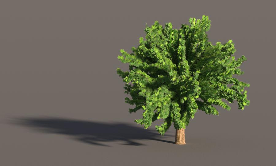 现实的枫树 royalty-free 3d model - Preview no. 5