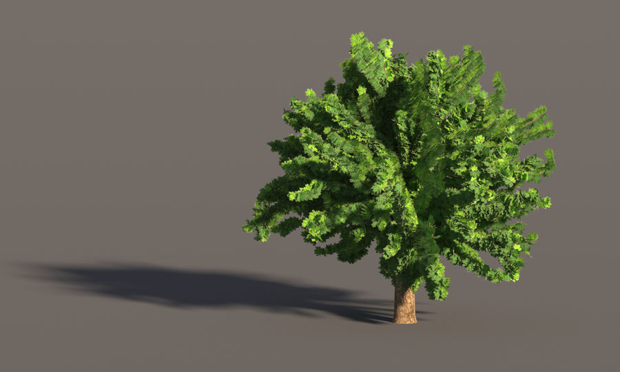 现实的枫树 royalty-free 3d model - Preview no. 8