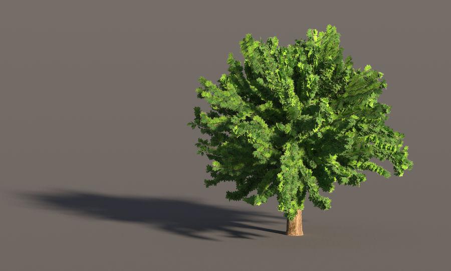 现实的枫树 royalty-free 3d model - Preview no. 12