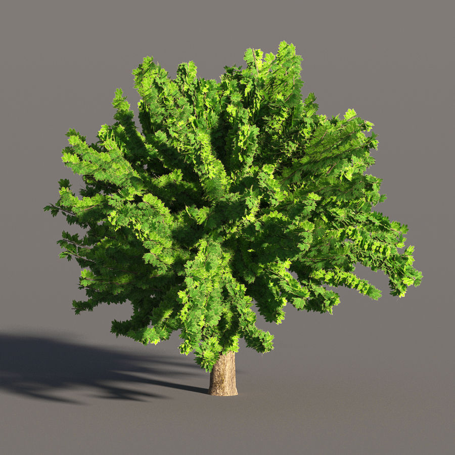 现实的枫树 royalty-free 3d model - Preview no. 1