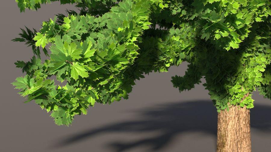 现实的枫树 royalty-free 3d model - Preview no. 2