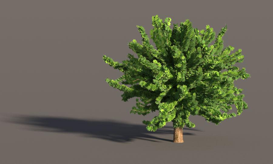 现实的枫树 royalty-free 3d model - Preview no. 9