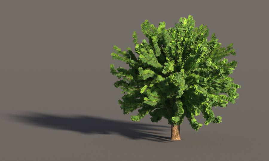 现实的枫树 royalty-free 3d model - Preview no. 11