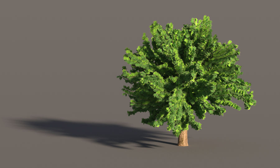 现实的枫树 royalty-free 3d model - Preview no. 4