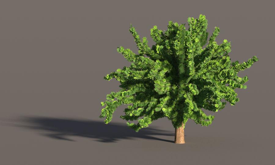 现实的枫树 royalty-free 3d model - Preview no. 6