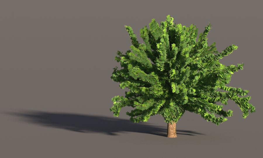 现实的枫树 royalty-free 3d model - Preview no. 10