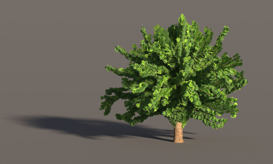 现实的枫树 royalty-free 3d model - Preview no. 7
