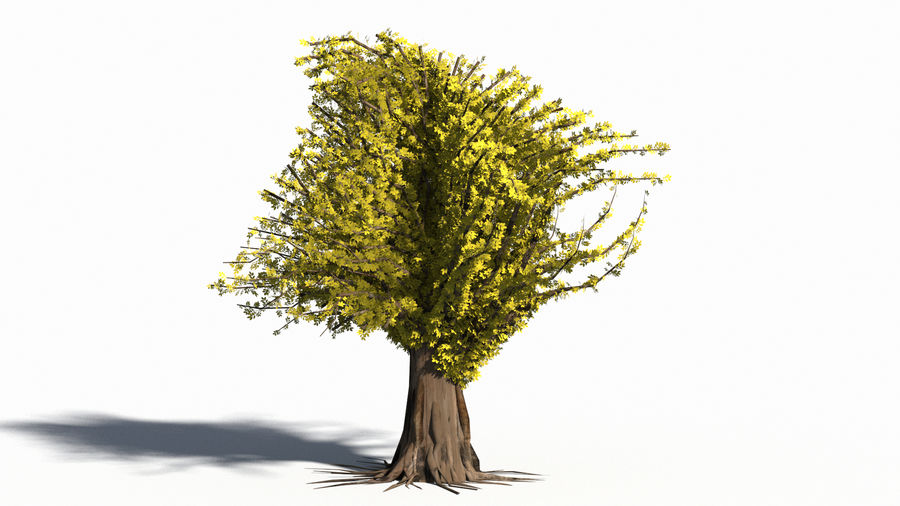 Árbol realista royalty-free modelo 3d - Preview no. 10