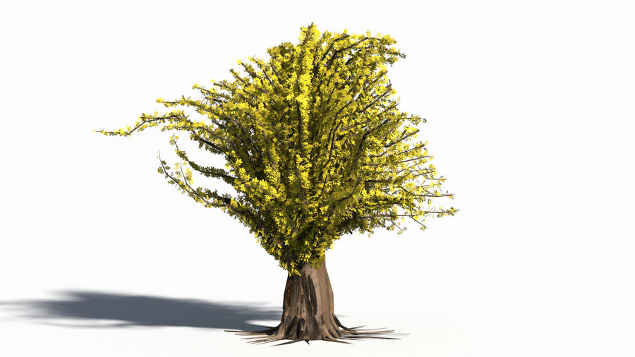 Árbol realista royalty-free modelo 3d - Preview no. 8