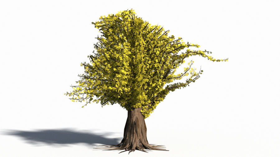 Árbol realista royalty-free modelo 3d - Preview no. 11