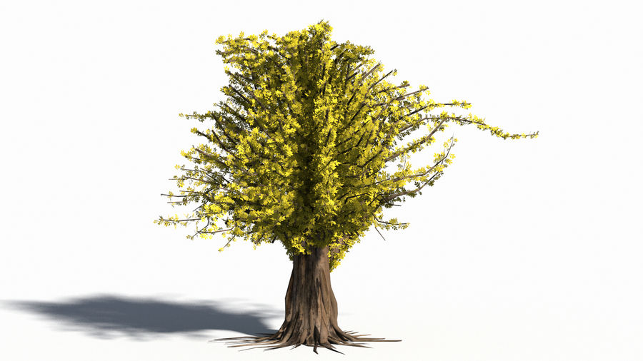 Árbol realista royalty-free modelo 3d - Preview no. 12