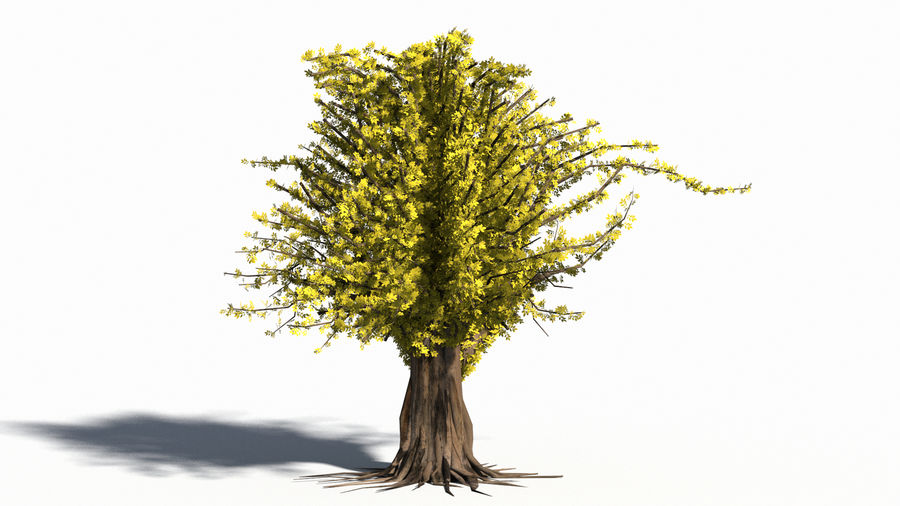 Árbol realista royalty-free modelo 3d - Preview no. 4
