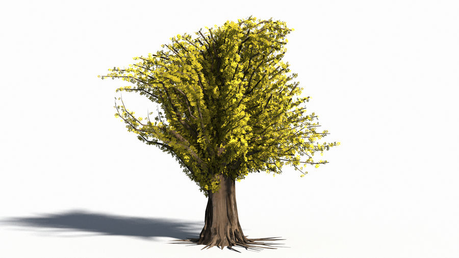 Árbol realista royalty-free modelo 3d - Preview no. 7