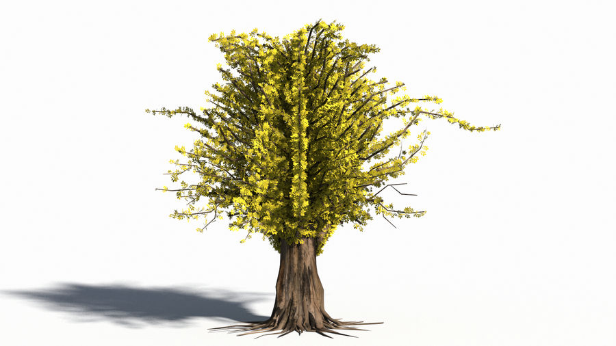 Árbol realista royalty-free modelo 3d - Preview no. 5