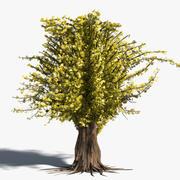 Árbol realista modelo 3d