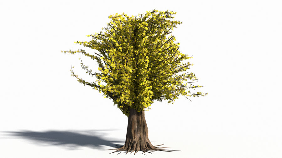Árbol realista royalty-free modelo 3d - Preview no. 6