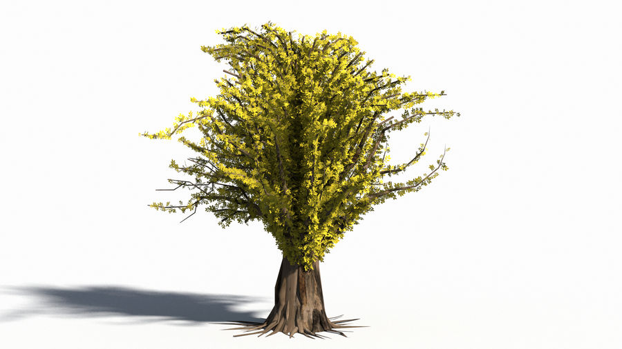 Árbol realista royalty-free modelo 3d - Preview no. 9
